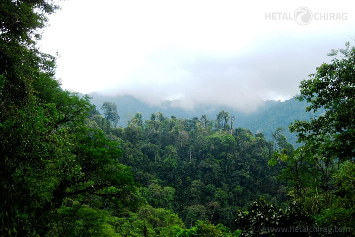 Costa Rica Rainforest | Chirag Virani | Hetal Virani