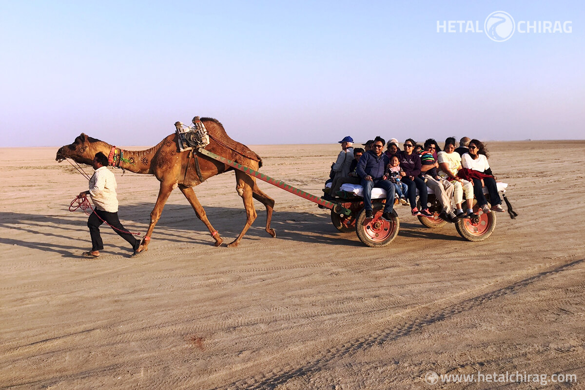 Exciting camel cart ride at Tent City in Kutch | Chirag Virani | Hetal Virani