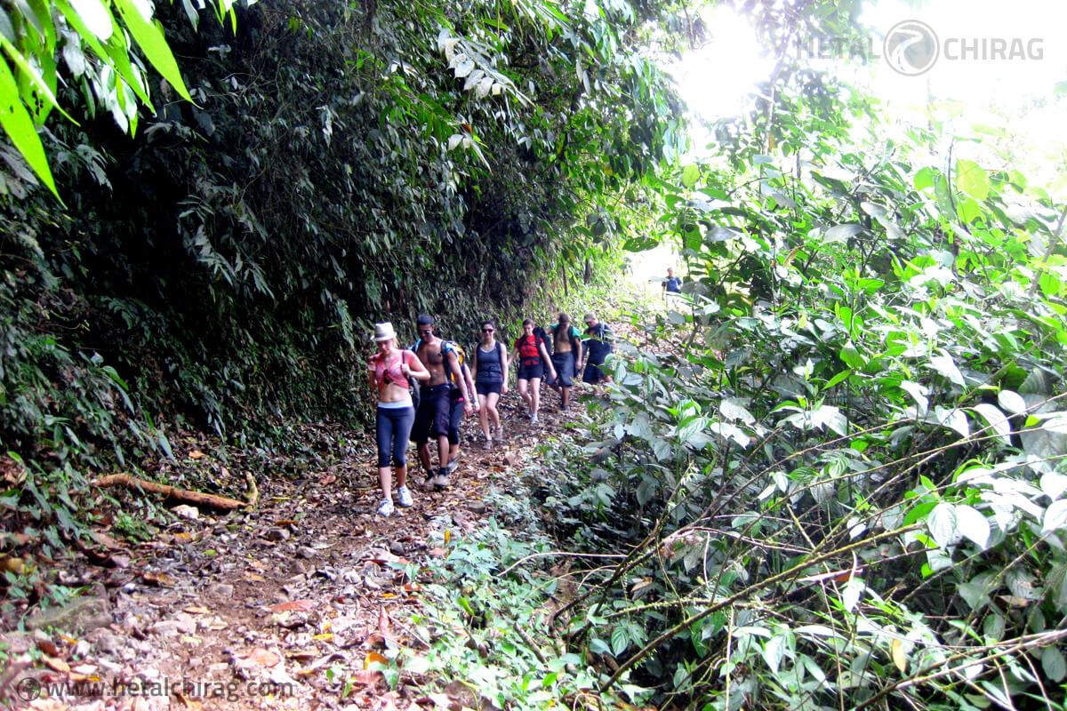 Rain Forest, Brujo, Costa-Rica | Chirag Virani | Hetal Virani