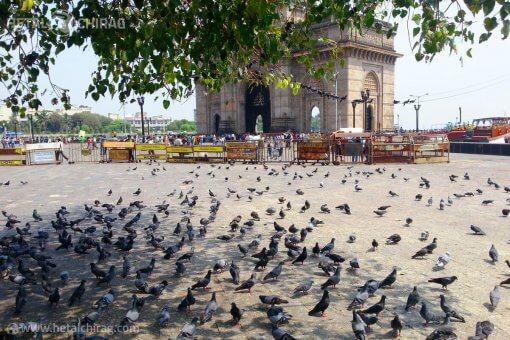 Mumbai,-Maharashtra,-India | Chirag Virani | Hetal Virani