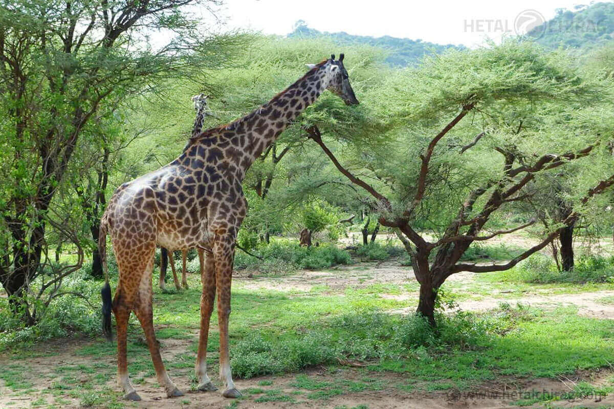 Naivasha,-Kenya | Chirag Virani | Hetal Virani