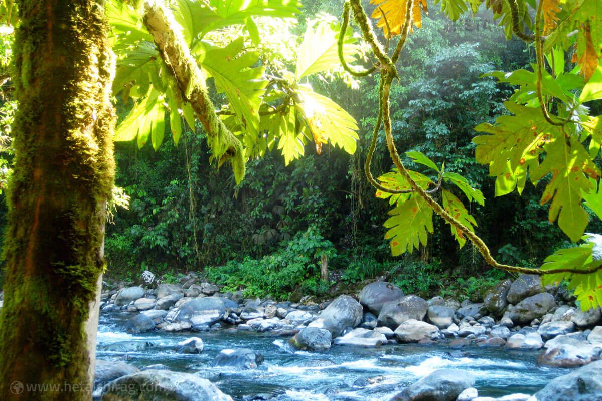 Brujo,-San-Jose,-Costa-Rica | Chirag Virani | Hetal Virani