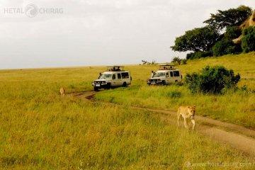 Lake-Manyara-National-Park,-Tanzania   Chirag Virani   Hetal Virani