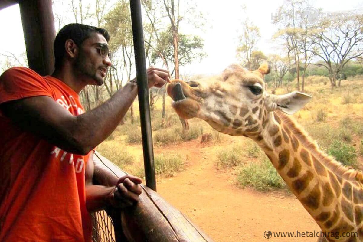 Fun time with the giraffes   Chirag Virani   Hetal Virani