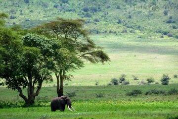 Lake-Manyara-National-Park,-Tanzania | Chirag Virani | Hetal Virani